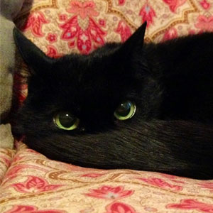 10+ Black Cats That Are Actually Toothless In Disguise