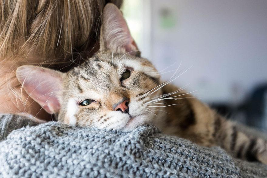 cats-without-eyelids-dora-felix-10
