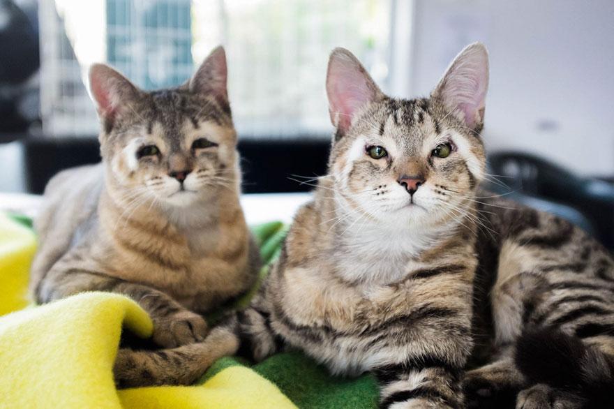 cats-without-eyelids-dora-felix-11