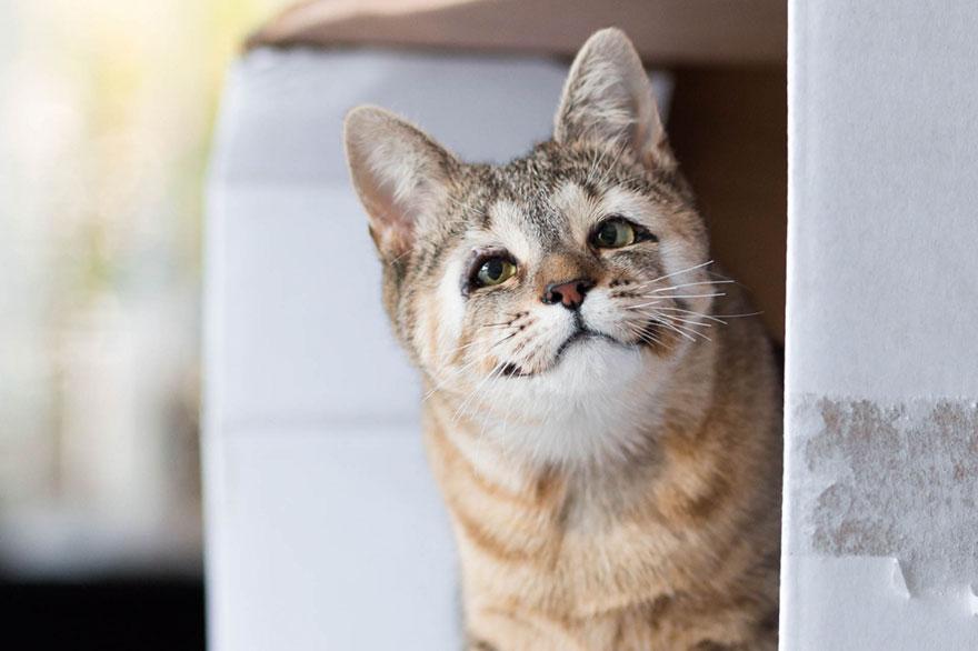 cats-without-eyelids-dora-felix-15