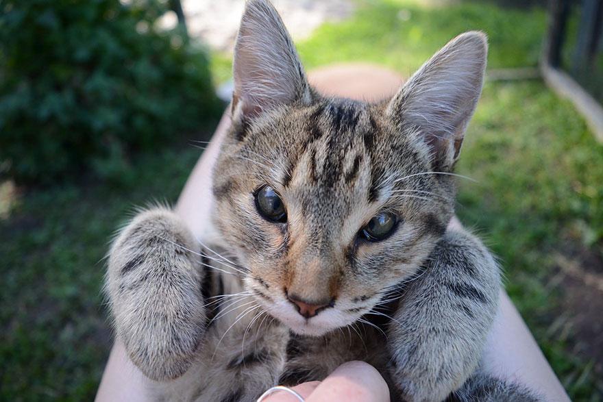 cats-without-eyelids-dora-felix-16