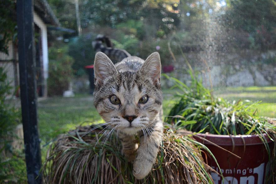 cats-without-eyelids-dora-felix-17