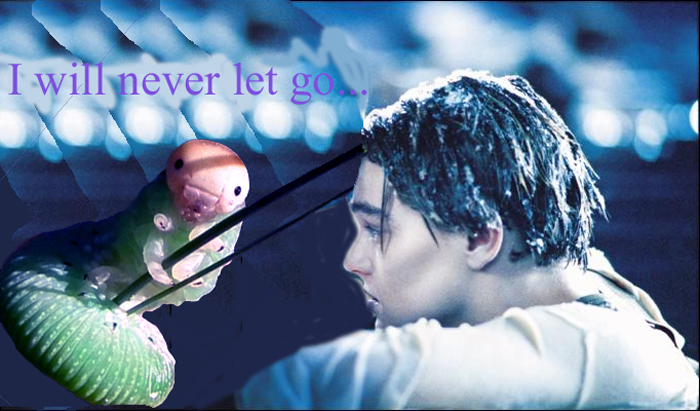 I Will Never Let Go...