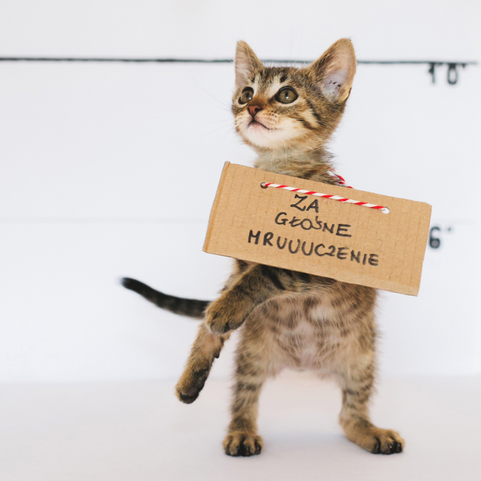 We Photographed Cats That Are Under The Care Of Our Foundation