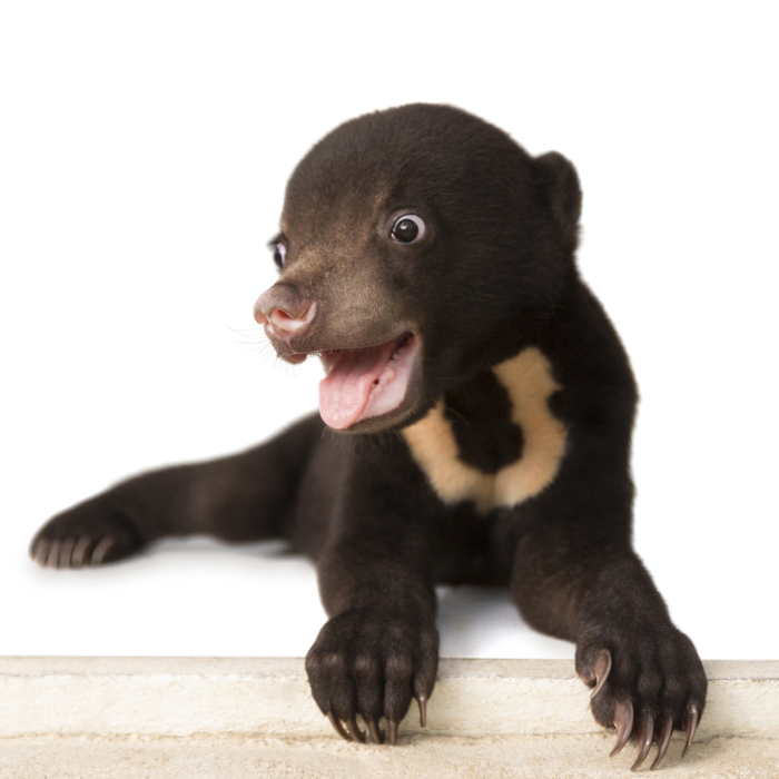 A Photographer Met The Most Adorable Bear Cub In The World