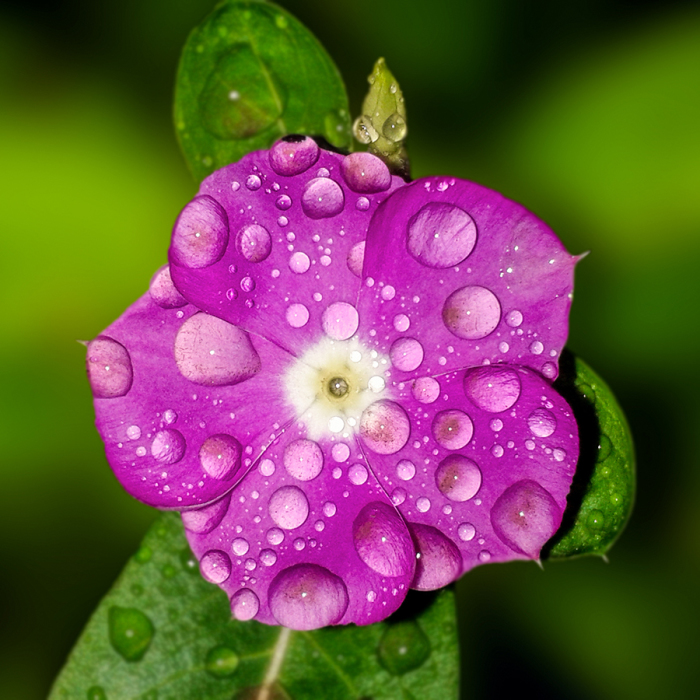 20+ Elegant Image Of Flowers, Sparkling Colors