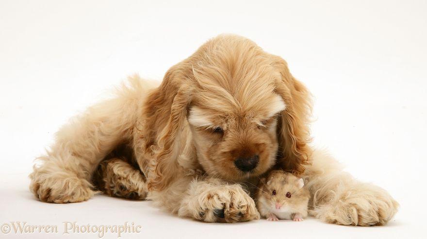 Сопоставление Домашние Животные