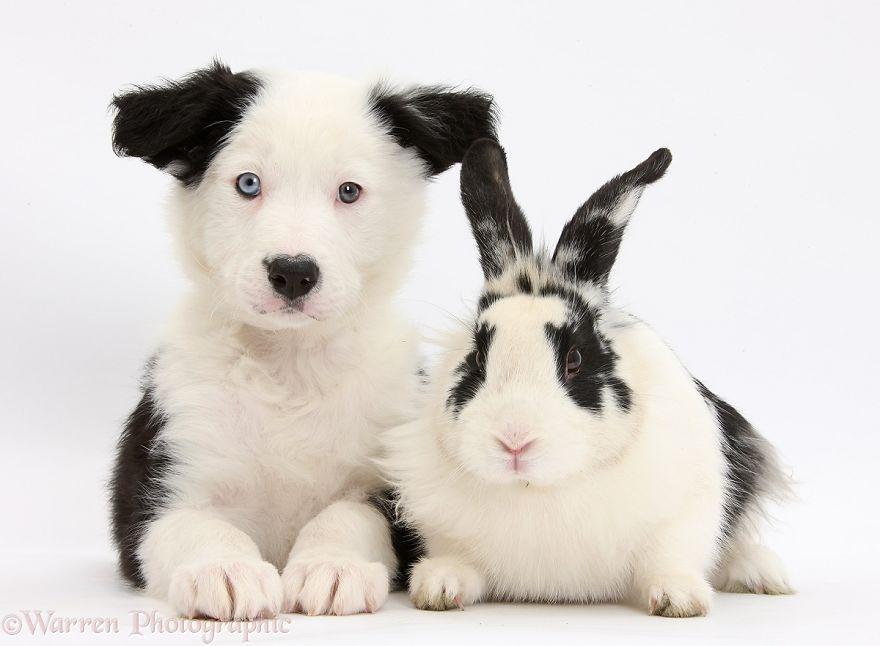 Coincidencia de Mascotas
