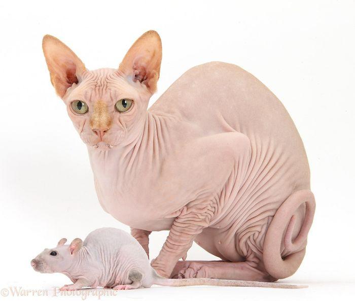 Matching Pets