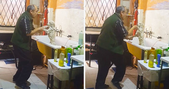 This Pet Groomer Caught Dancing With A Client's Dog Will Melt Your Heart