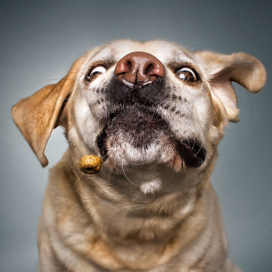 Hilarious Expressions Of Dogs Trying To Catch Treats In ...