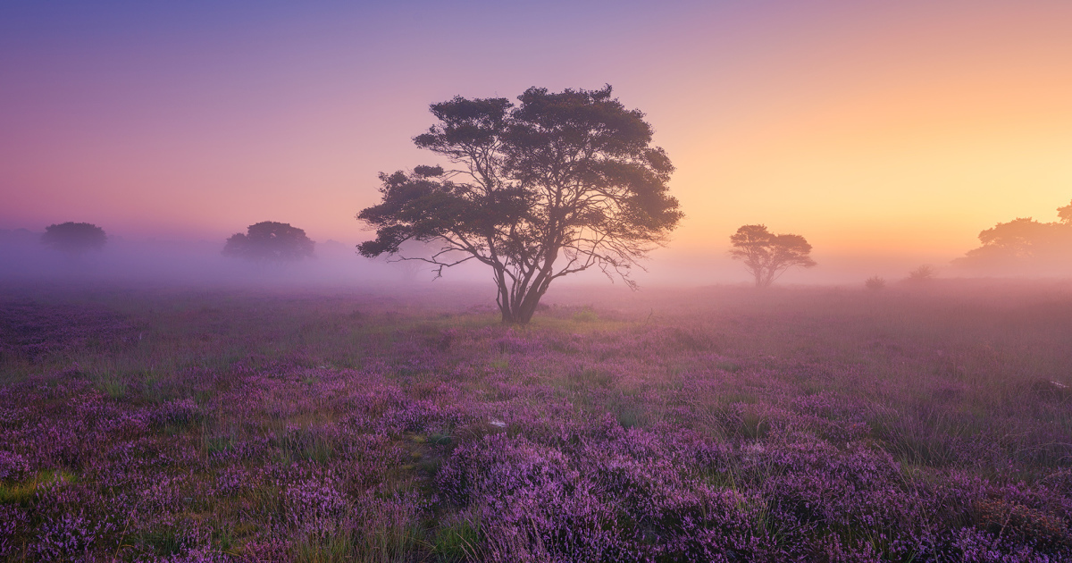 Why You Should Visit My Homeland The Netherlands In August – A Purple Dream
