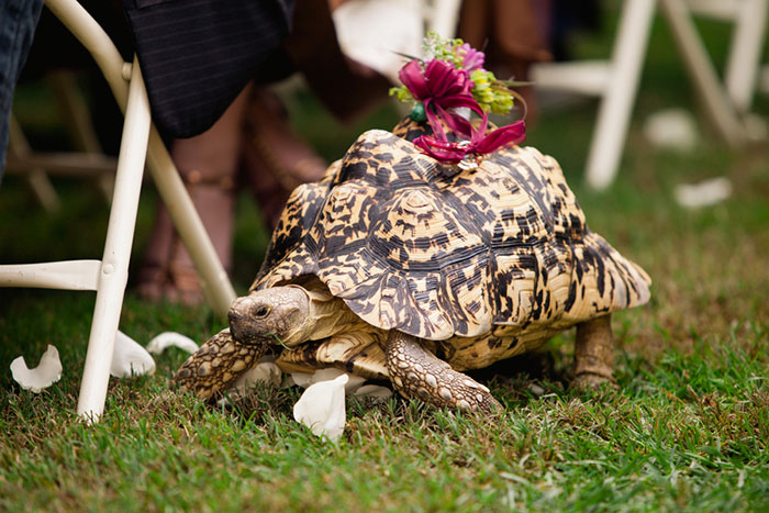 Tortoise Ring Bearer