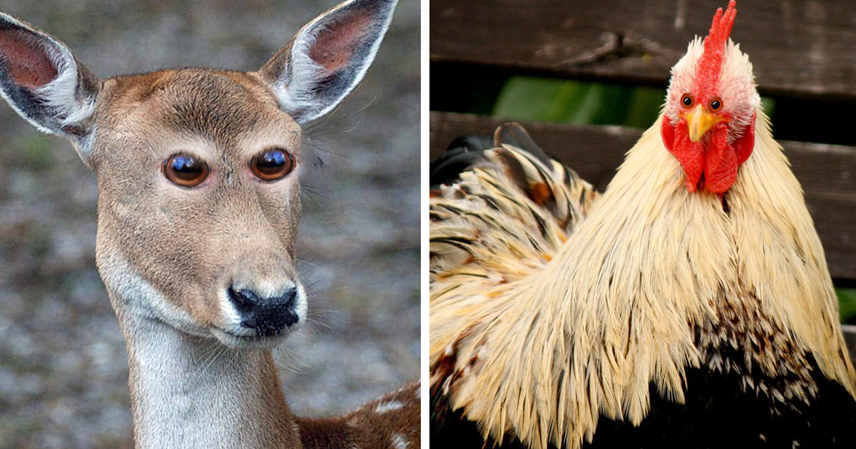 what 30 different animals would look like if their eyes were at the