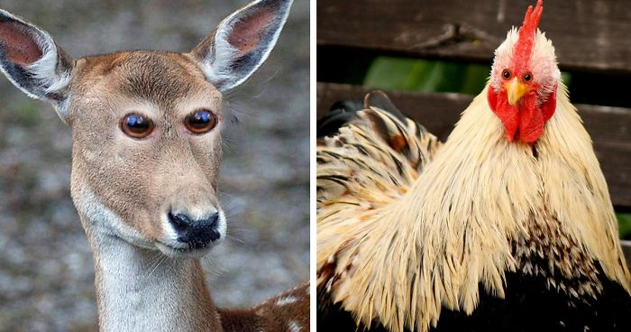 what 10 different animals would look like if their eyes