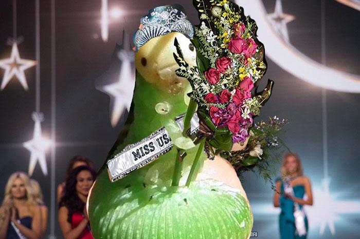 Miss Caterpillar