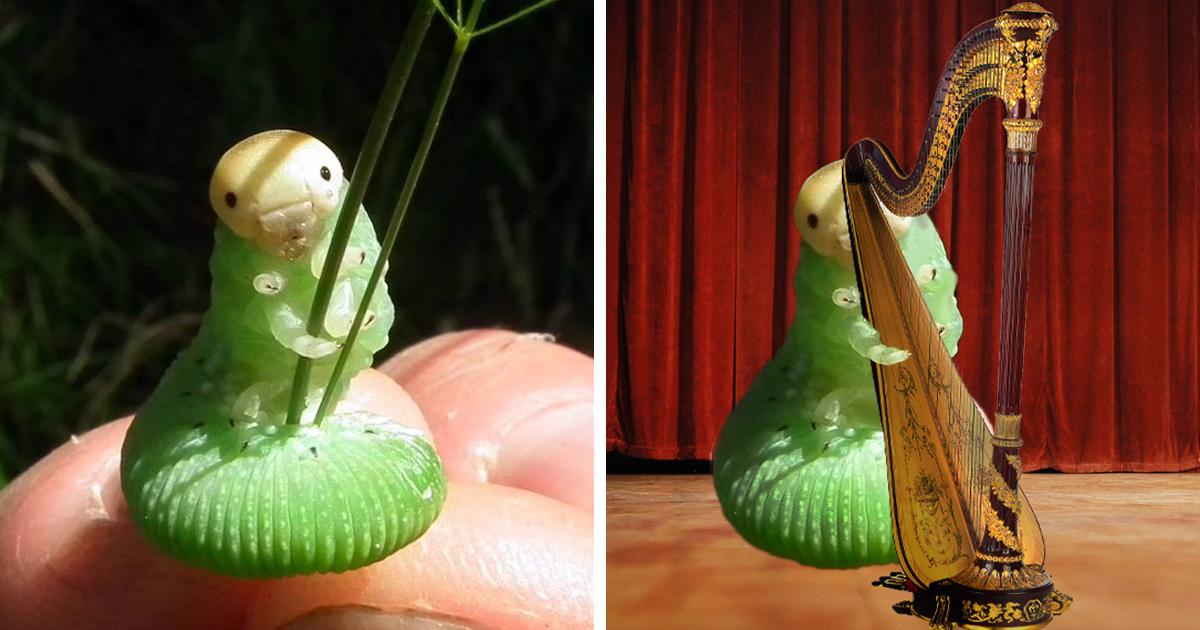 Caterpillar Holding Blade Of Grass Sparks Photoshop Battle