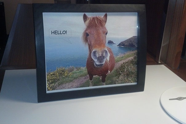 "Every Time My Girlfriend And I Go On A Vacation, I Ask For A Picture Of Horse Saying ""Hello!"" In The ""Special Requests"" Section Of The Reservation Form. Finally, A Hotel Delivers"