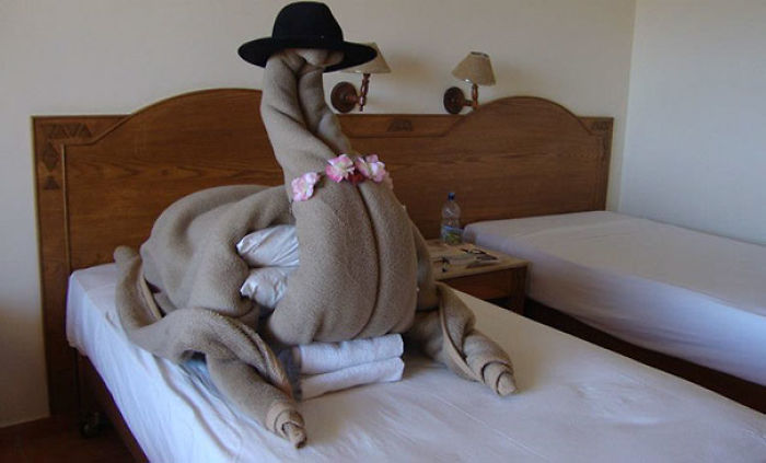 I Asked for A Camel In My Hotel Room