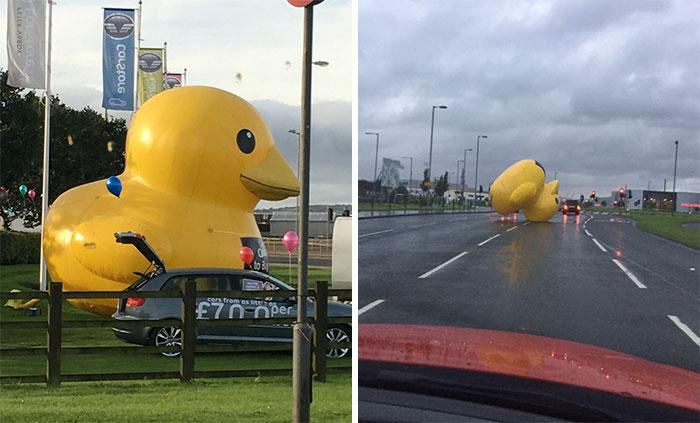 Giant Inflatable Duck Apocalypse Has Begun In Scotland (VIDEO)