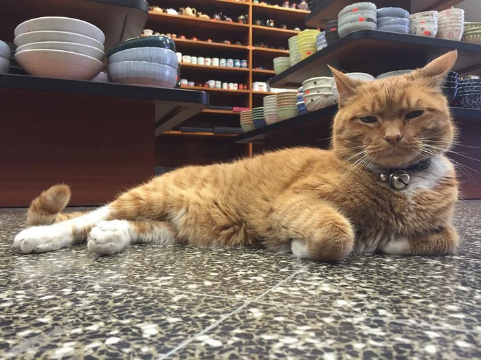 имбирь кот-магазин-владелец-NewYork-26