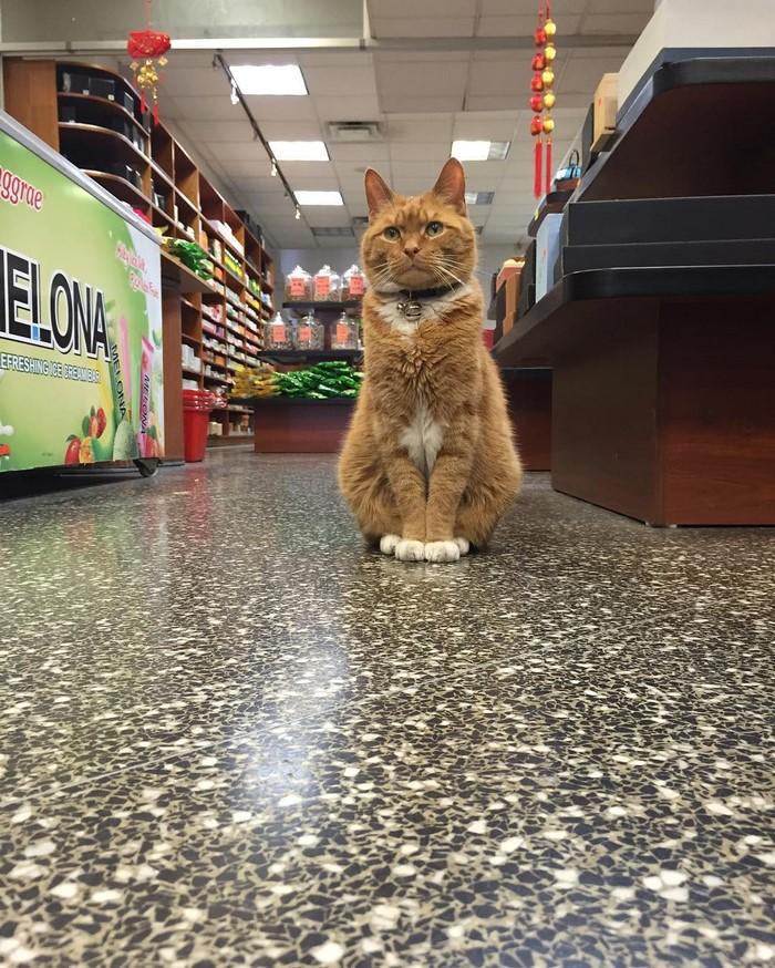 ginger-cat-store-owner-newyork-27