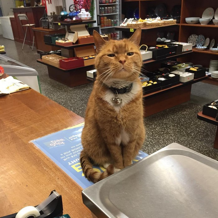имбирь кот-магазин-владелец-NewYork-28