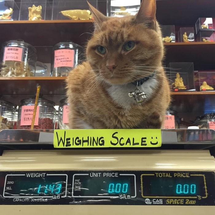 имбирь кот-магазин-владелец-NewYork-33