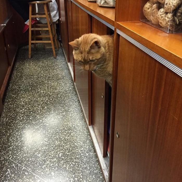 имбирь кот-магазин-владелец-NewYork-36