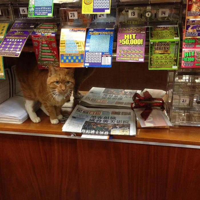 имбирь кот-магазин-владелец-NewYork-45