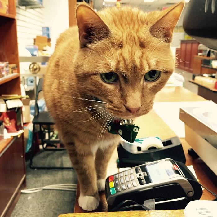 имбирь кот-магазин-владелец-NewYork-48