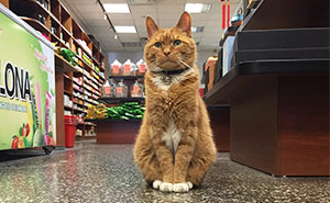 This Cat Has Spent 9 Years Running a Store Without Taking a Day Off