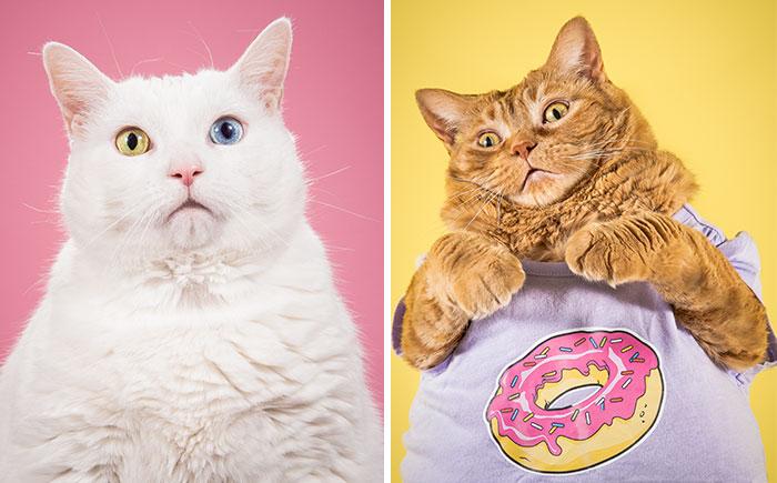 I Photograph Adorable Fat Cats