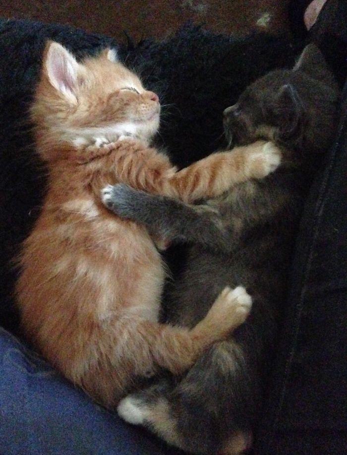 Freyr And Fenrir Cuddling When They Were Kittens