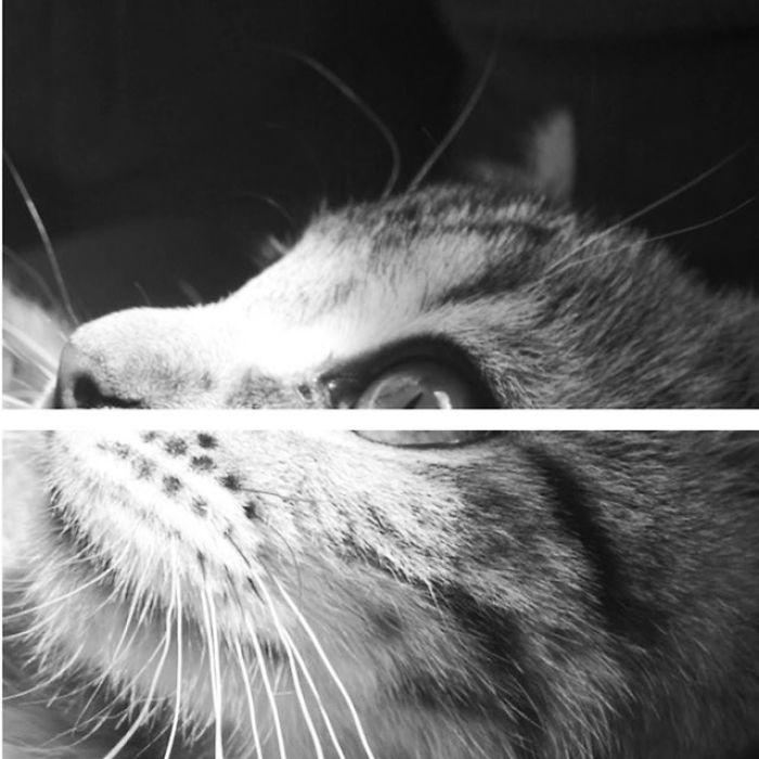 Most Photogenic Kitten?