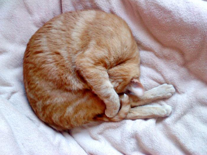 Sleeping Like A Little Bunny