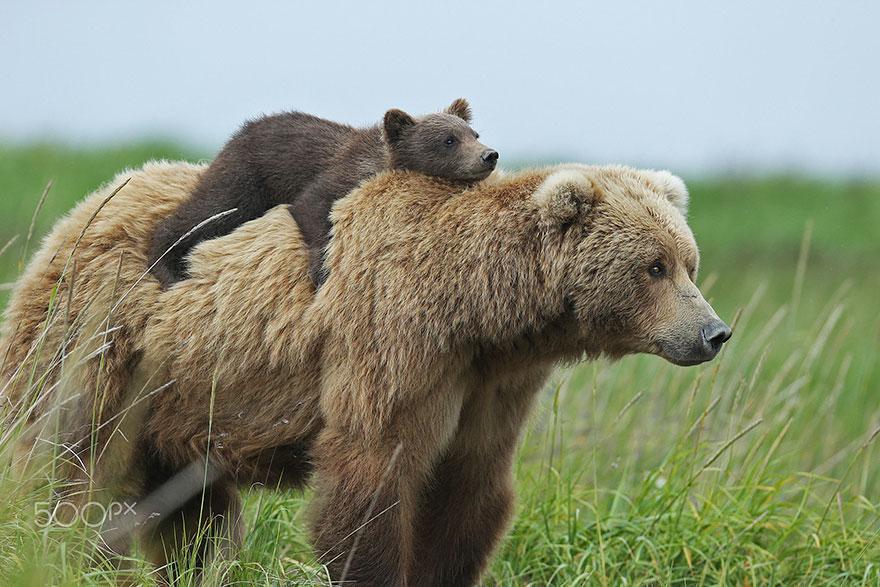 15+ Un-Bear-Ably Cute Momma Bears Teaching Their Teddy Bears How ...