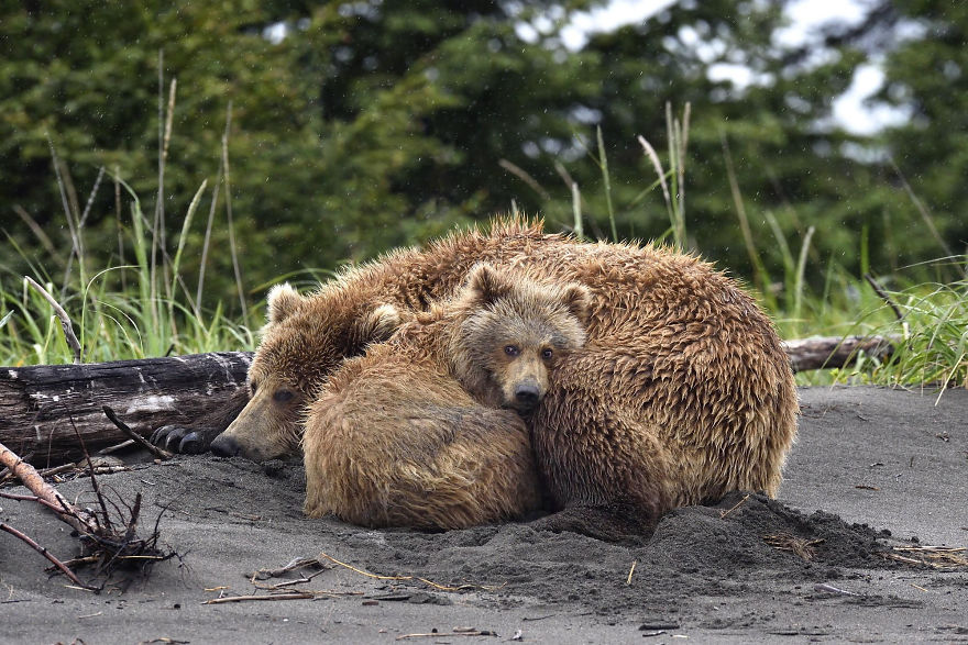 Momma Bear With Her Cub