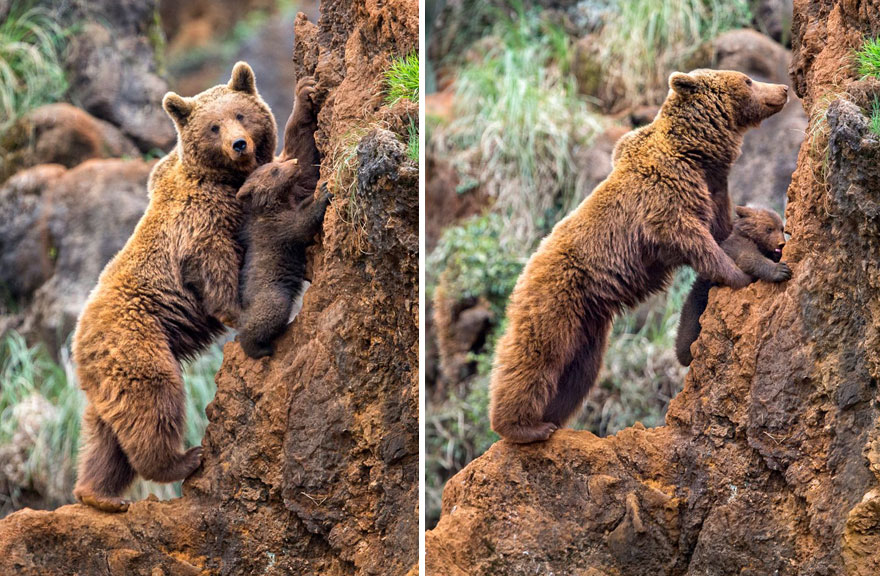 Learning To Climb