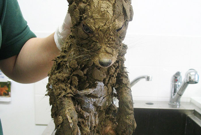 A Mysterious Animal Found In Mud Couldn't Be Identified Until They Cleaned Him
