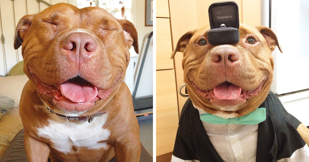 Meet Meaty The Dog Who Can T Stop Smiling After Being Rescued From A Shelter Bored Panda