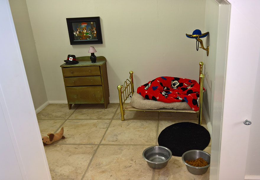 room-for-chihuahua-dog-4