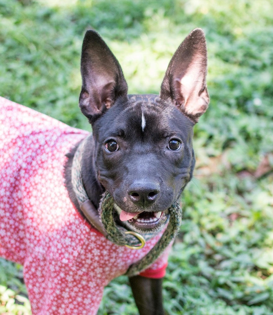 shelter-dogs-pajamas-atlanta-10