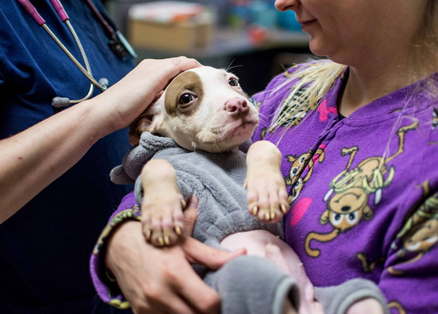 shelter-dogs-pajamas-atlanta-11