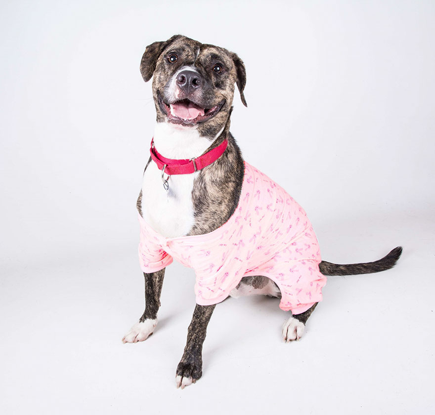 shelter-dogs-pajamas-atlanta-5