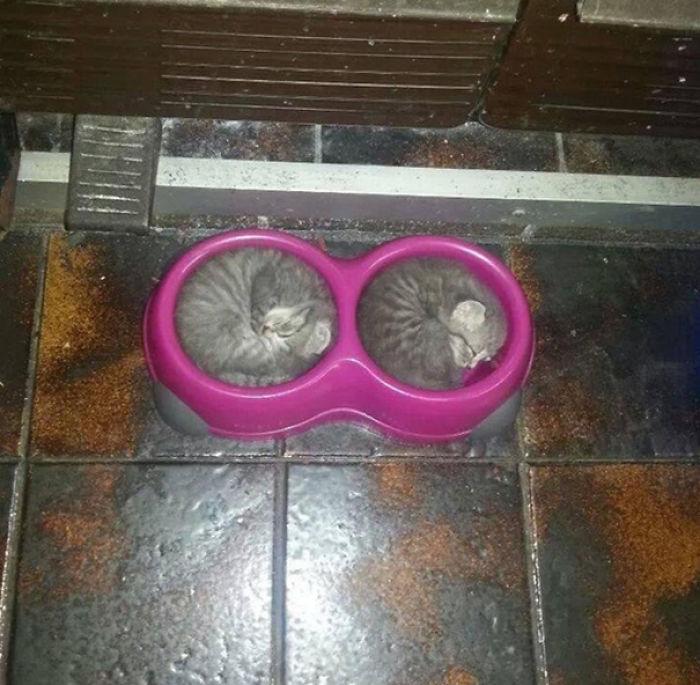 These Kittens Sleeping