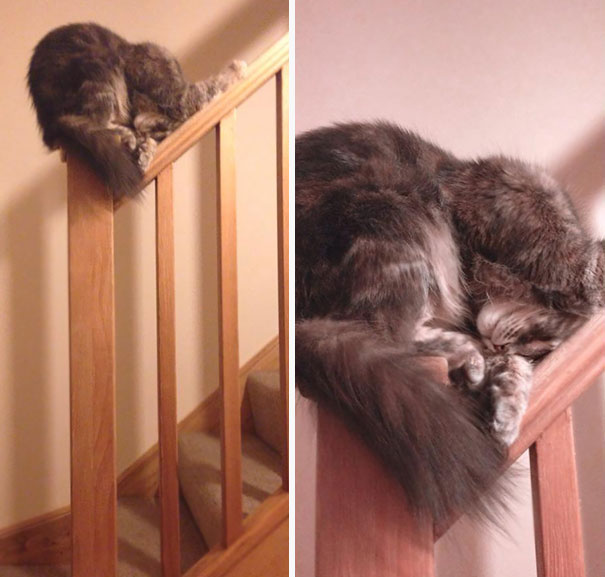 Of All The Places A Cat Could Choose To Get Some Sleep