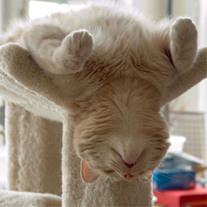 15+ Pics That Prove Cats Can Sleep Purrretty Much Anywhere