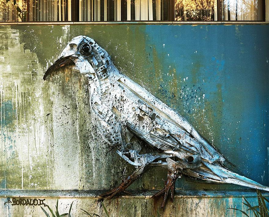 Dove White Dove