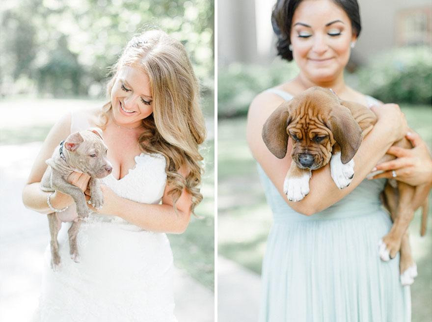 wedding-puppies-instead-flowers-pensylvannia-12
